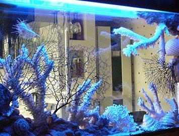 Сухой аквариум размещение в нише